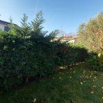 Entretien de jardin Toulouse